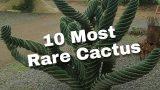 10 Most Rare Cactus