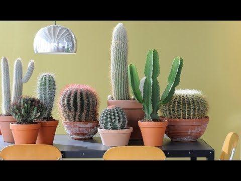 Tipos y Nombres de Cactus !