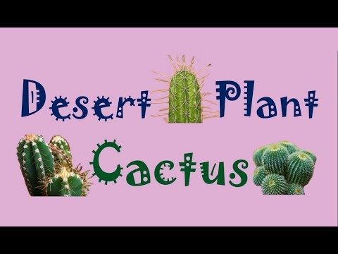 Adaptations of Desert Plants – Cactus