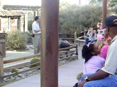 living desert animal show