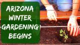 Arizona Winter Gardening – Starting Tomatoes, Bell Peppers, Cucumbers & Herbs