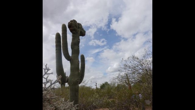Phoenix –  Desert Botanical Garden