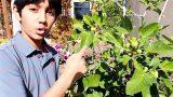 Top 10 Most Strange Desert Plants