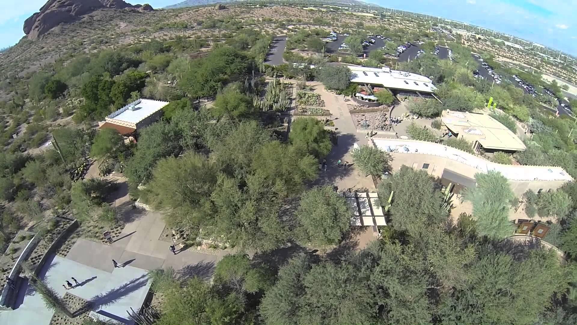 Flying high up at the Desert Botanical Garden.