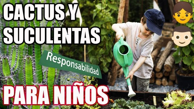 CACTUS Y SUCULENTAS PARA NINOS