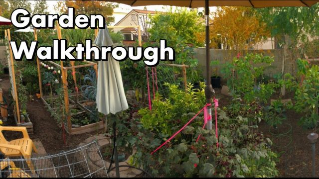 Garden Walkthrough 12.20.2017