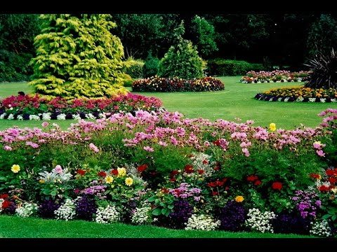 Backyard Landscape Ideas Az
