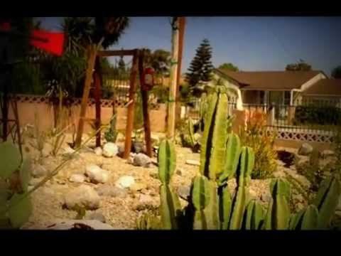 Huge cactus garden