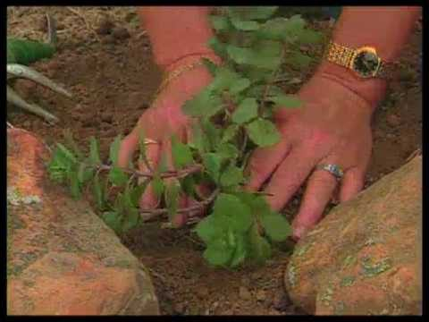 How To Prepare Soil For A Xeriscape Bed