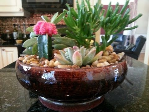 Simple Cactus Garden Ideas