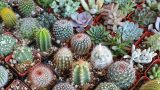 **Exotic Cactus Collection**Varieties Of Cactus**Cactus Collection Library**