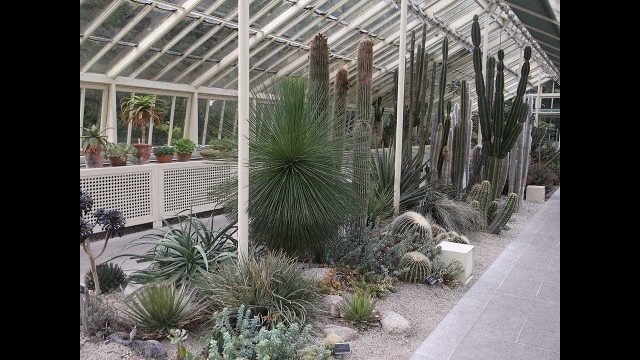 Join us on a FUN visit to The National Botanic Gardens of Ireland