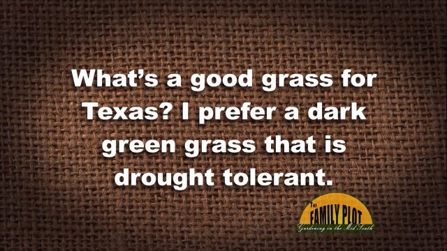 Q&A – What is a good grass for Texas?