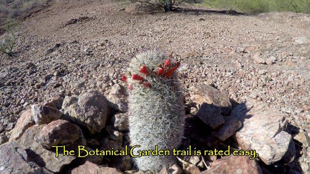 Desert Botanical Garden – Fountain Hills, AZ