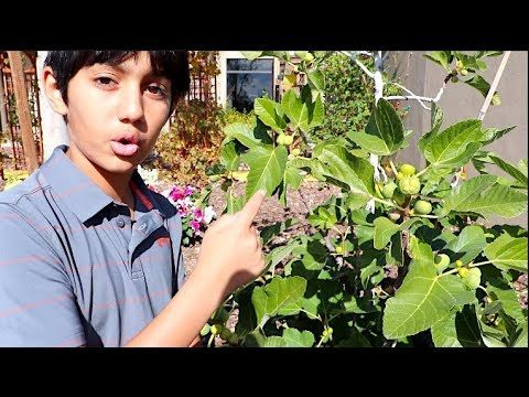 BEST FRUIT TREES & EDIBLES to Plant in a DESERT GARDEN | FULL LIST!