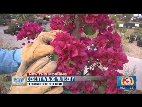 VIDEO: Easy plants for desert landscaping