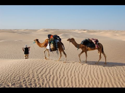 Ships of the Desert – The Secrets of Nature