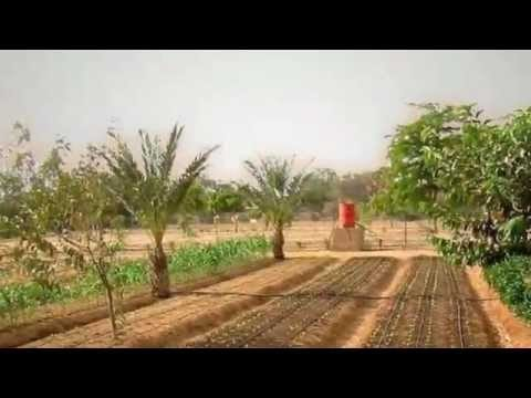 Growing Crops in the Desert