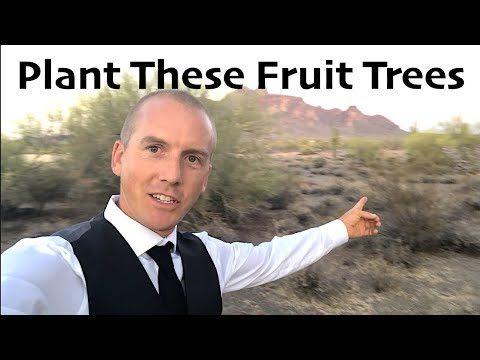 LEAVING ARIZONA – 5 BEST FRUIT TREES FOR DESERT BACKYARD GARDENS!
