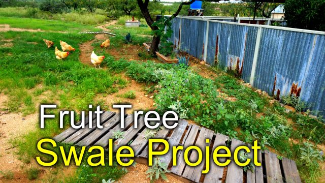 Rainwater swale for fruit trees – Desert Permaculture