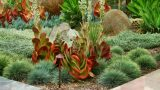 Beautiful Landscaping Ideas – Desert Style, Without Lawn