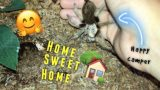 Arizona Blonde TARANTULA gets a NEW HOME !!!