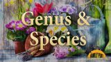 Genus and Species – Garden Glossary