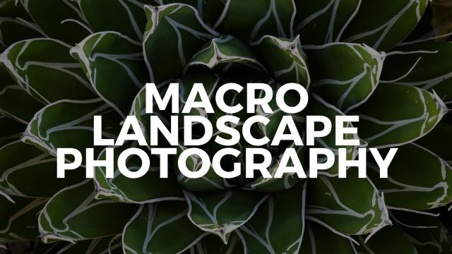 Macro Landscape Photography in the Desert Botanical Garden in Phoenix Arizona