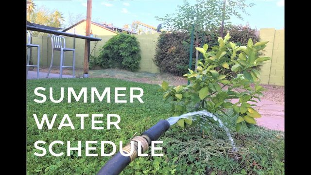 Summer Watering Schedule-Plants  Thriving in the Desert!!!