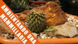 Ambientando un Cactus – by Desert plants