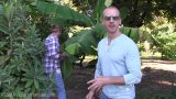 Insane FOOD FOREST and GARDEN TOUR in the DESERT!