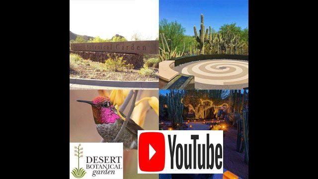 Desert Botanical Garden Phoenix AZ 1