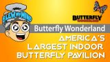 Butterfly Wonderland Scottsdale, AZ – America's largest indoor butterfly pavilion