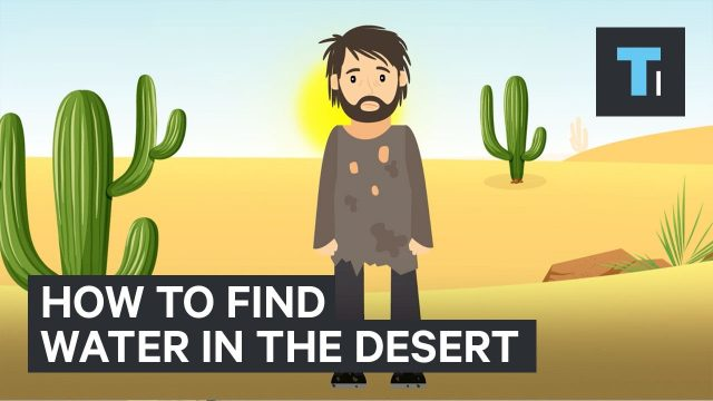 Here's how to find water if you're ever stuck in the desert