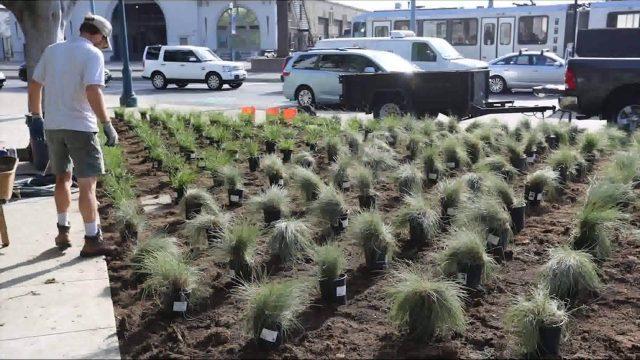 Drought Tolerant Lawn Pilot Installation