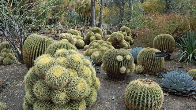 Top 9 Most Mysterious Desert Plants