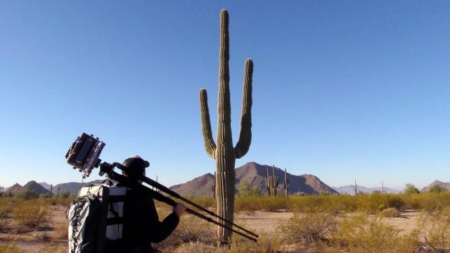 Photography On Location: Sonoran Desert Saguaros (Pt. 2)