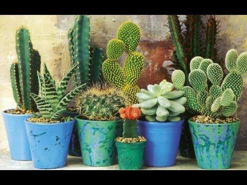 28 Ideas para decorar con cactus !