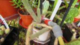 How to know when to start watering your Cacti & Succulent Plants in the Spring