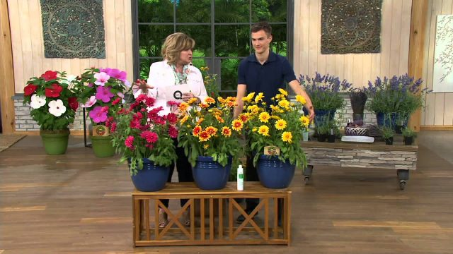 Roberta's 6-piece Arizona Native Blanket Flower on QVC