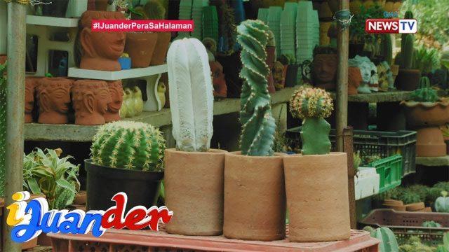 iJuander: Bakit nahihilig si Juan sa pag-aalaga ng mga cactus at succulent?