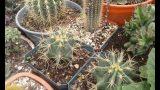Visitando un vivero de cactus 2 – by Desert plants