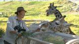 The Living Desert Giraffe Exhibit