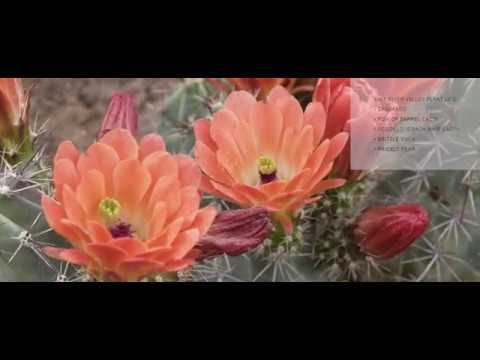 Desert Landscaping Guide with Indigenous Plants