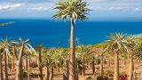 Pachypodium Lamerei Rare Madagascar Palm Plant Cactus Cacti Caudex Bonsai 4