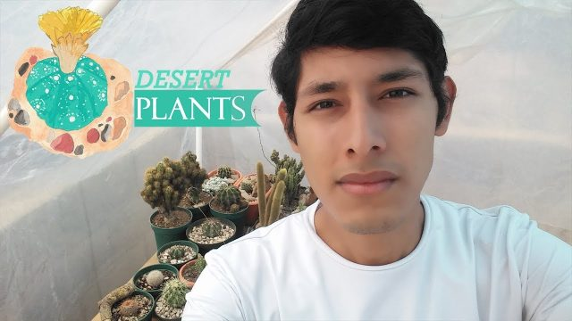 ¿Porque me gusta cultivar mis cactus entre rocas? by Desert plants