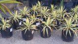 Walker's Palms and Desert Plants