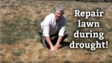 How To Take Care of a Lawn During a Drought