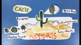Desert Ecosystems – Plant and Animal Adaptations (Student Made)