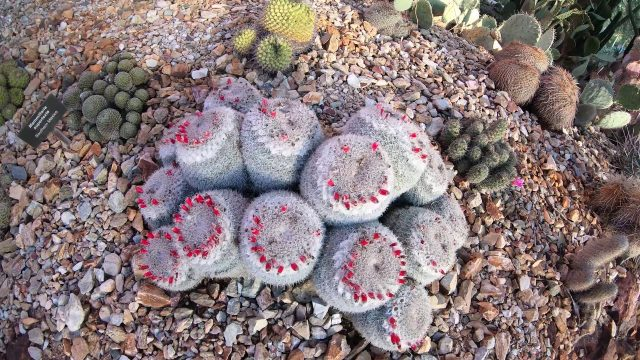 Phoenix Desert Botanical Gardens 2018